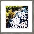 Sun And Marsh 2 Ae Framed Print