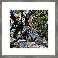 Sun Dried Anhinga Framed Print