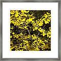 Sun-kissed Golden Leaves 2 Framed Print
