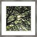 Sunburst Through Tree Framed Print