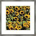 Sunflower Near Van Gogh Museum Framed Print