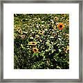 Sunflower Stalks Framed Print