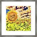 Sunflower Storm Framed Print