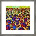 Sunflowers Field At Sunrise Framed Print