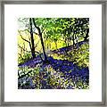 Sunlit Bluebell Wood Framed Print