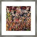 Sunlit Fall Corn Framed Print