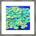 Sunrise Waterlilies Framed Print