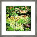 Sunshine In The Garden Framed Print