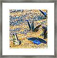 Swallowtail Butterfly Convention Framed Print
