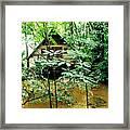 Swamp Hut In Honduras Framed Print