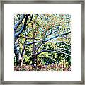 Sycamore Trees At The Zoo Framed Print