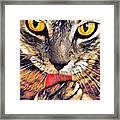 Tabby Cat Licking Paw Framed Print