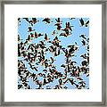 Taking Flight 2 Framed Print