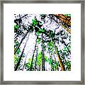 Tall Trees To The Sky Framed Print