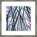 Tall Wet Grass Framed Print