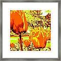Tangerine Tulips Framed Print