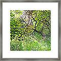 Tangled Embrace Framed Print