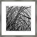 Tangled Grass Framed Print
