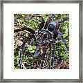 Tarantula Pamphobeteus Sp Male, Mindo Framed Print
