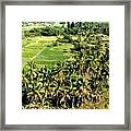Taro Fields Framed Print