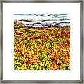 Temecula Vineyard Framed Print
