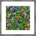 Texas Bluebonnets And Indian Paintbrush Framed Print