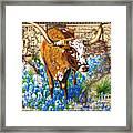 Texas Longhorn In Bluebonnets Framed Print