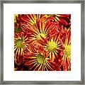 Chrysanthemum Bouquet Framed Print