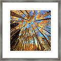 The Aspens Above - Colorful Colorado - Fall Framed Print