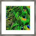The Beauty Of Color Framed Print