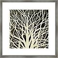 The Birch Tree Framed Print