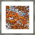 The Color Of Fall 1 Framed Print