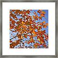 The Color Of Fall 2 Framed Print