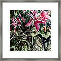 The Day Lilies Framed Print