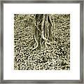 The Deep Dark Woods Framed Print