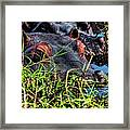 The Eating Machine Called A Hippo Framed Print