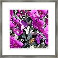 The Flight Of The Bumble Bee Framed Print