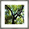 The Grace Of A Lonely Tree Framed Print