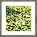 The Lily Pond #2 Framed Print