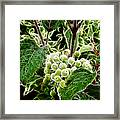 The Olde Grapevine Framed Print