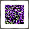 The Pathway To Purple Framed Print