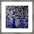The Peacock Fan Framed Print