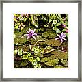 The Pond Framed Print