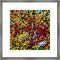 The Rainbow Tree Framed Print