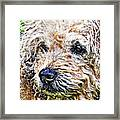 The Scruffiest Dog In The World Framed Print