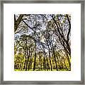 The Silent Forest  Framed Print