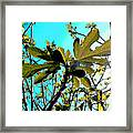 The Spring Has Come Framed Print