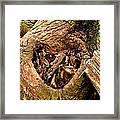 The Valentine Tree 2 Framed Print