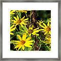 Thin-leaved Sunflower Framed Print