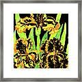 Three Yellow-black Irises, Painting Framed Print